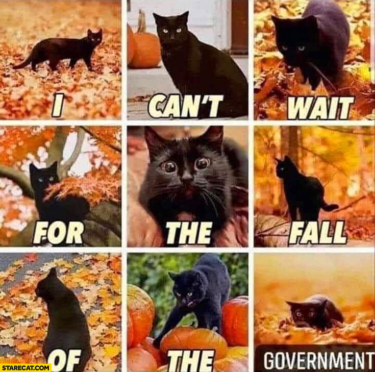 Cat autumn fall I can't wait for the fall of the government