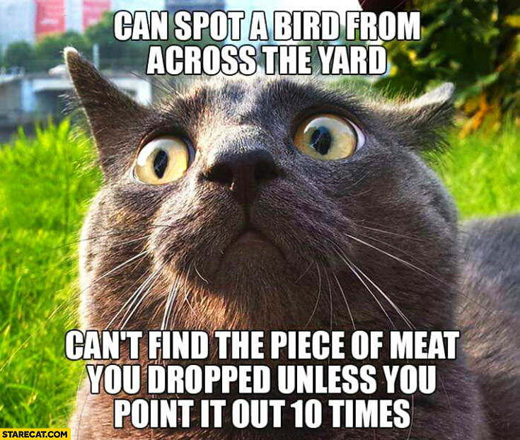 Cat can spot a bird from across the yard cant find the piece of meat you dropped unless you point it out 10 times