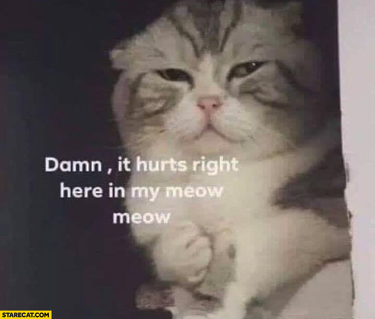 Cat damn it hurts right here in my meow meow