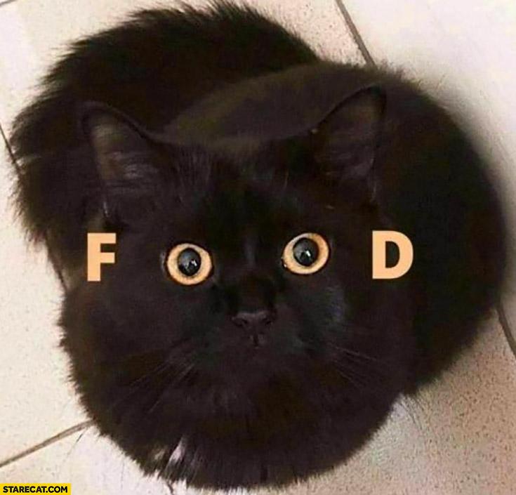 Cat eyes saying food