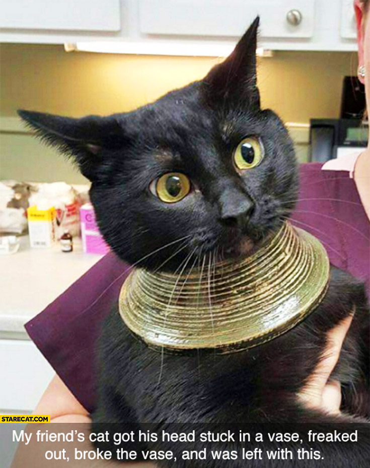 Cat got his head stuck in a vase, freaked out, broke the vase, was left with a collar