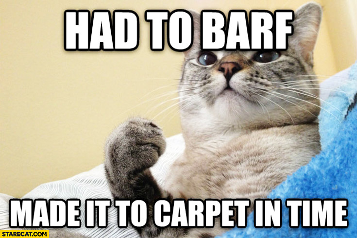 Cat had barf made it to carpet in time