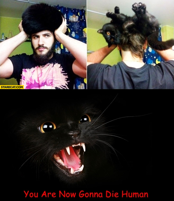 Cat hair wig you are now gonna die human