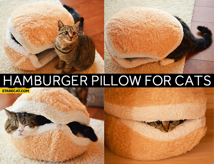 Cat hamburger pillow