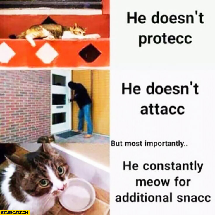 Cat he doesn't protec, he doesn't attac but most importantly he constantly meof for additional snacc
