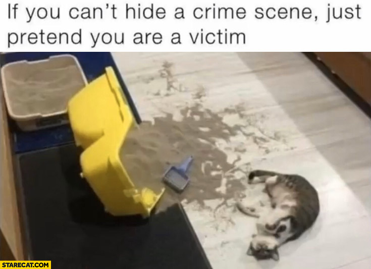 Cat if you can't hide a crime scene just pretend you are a victim