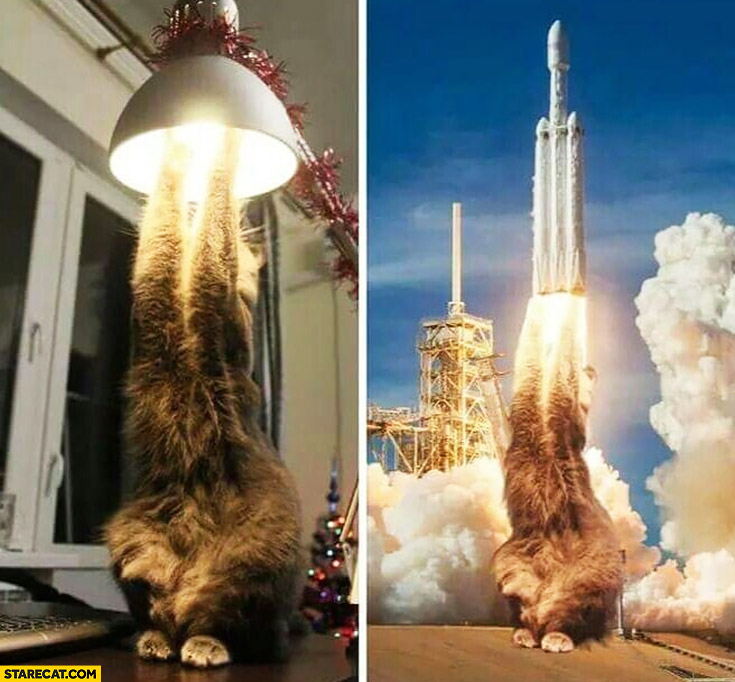 Cat in a lamp looks like a starting space rocket photoshopped