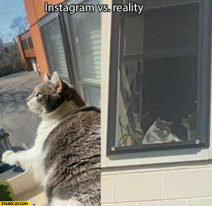 Cat instagram vs reality picture comparison