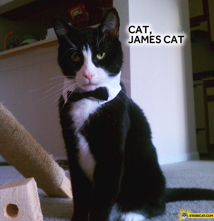 Cat James cat
