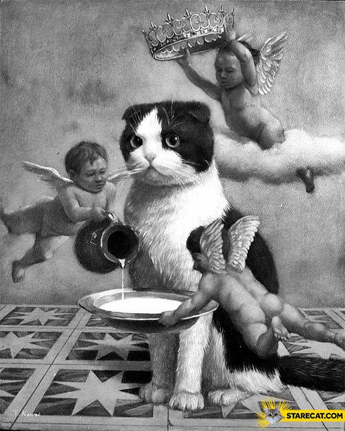 Cat king angels serving