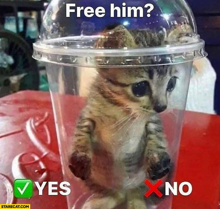 Cat kitty in a drink package free him yes no you choose