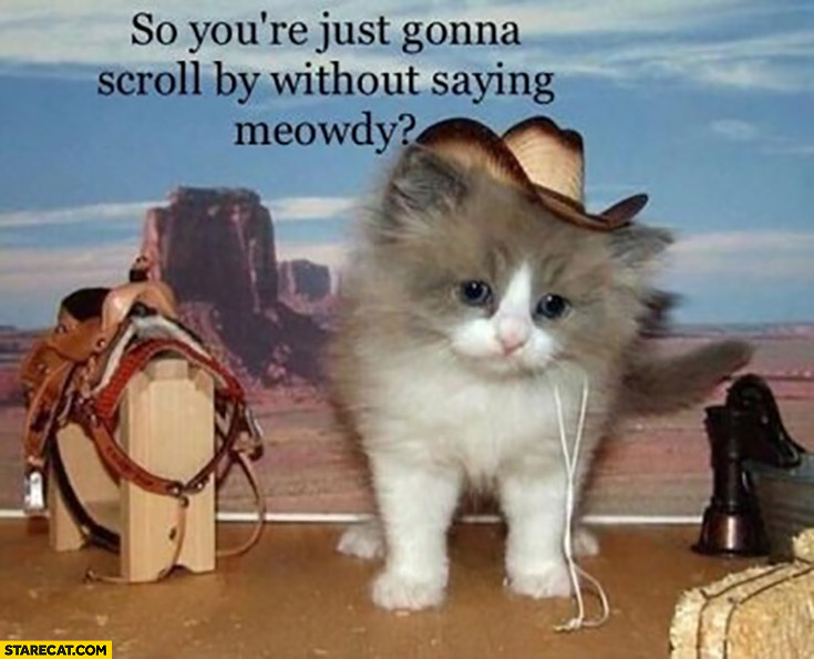Cat kitty so you're just gonna scroll by without saying meowdy