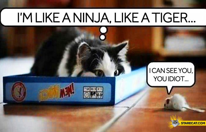 Cat like a ninja like a tiger I can see you idiot