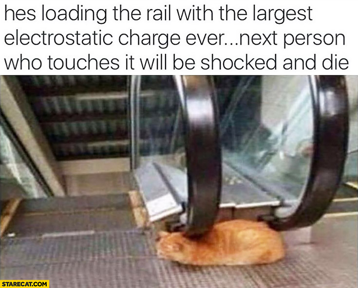 Cat loading the rail with the largest electrostatic charge ever, next person who touches it will be shocked and die