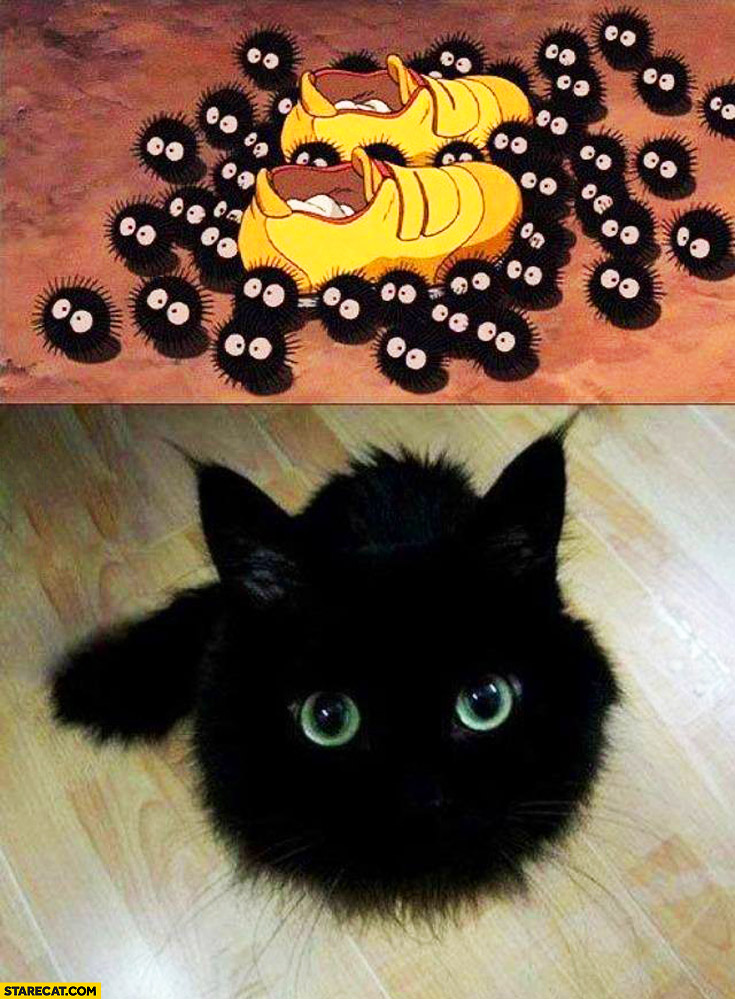 Cat looking like black fuzzy balls