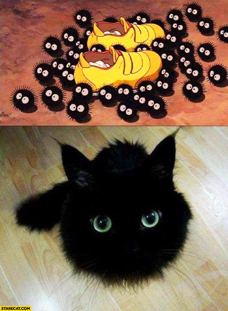 Cat Pictures Starecat Com Page 7
