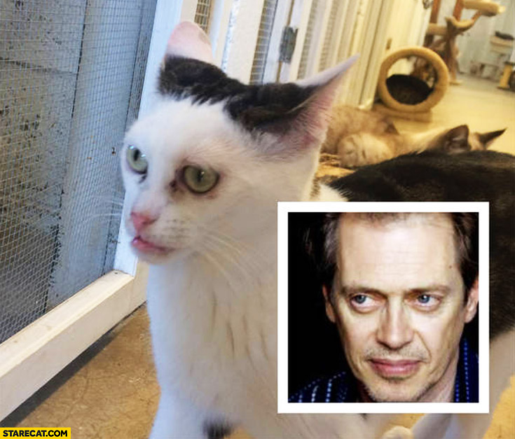 Cat looking like Steve Buscemi lookalike