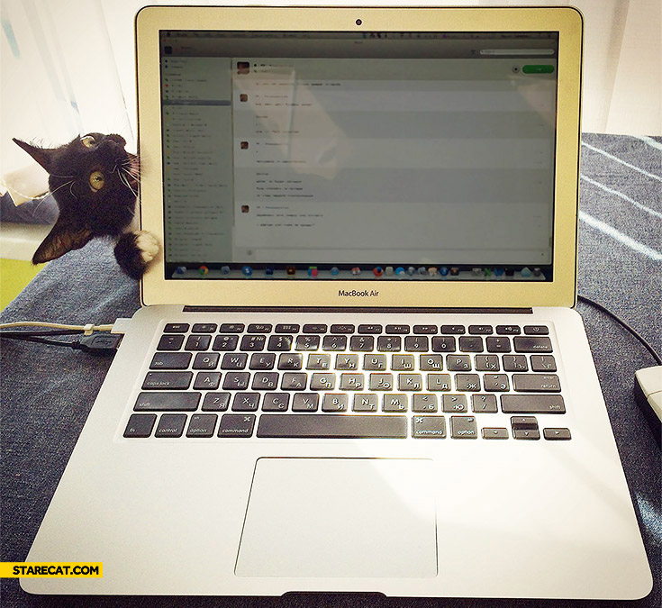 Cat MacBook