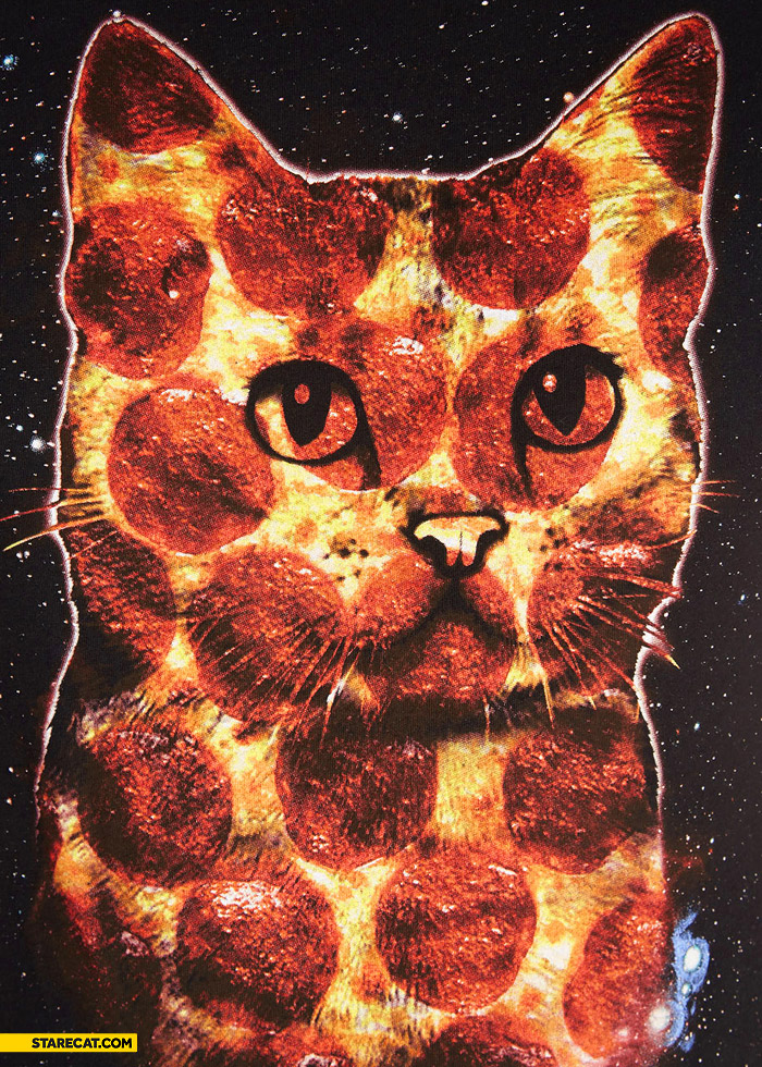Cat made of pizza