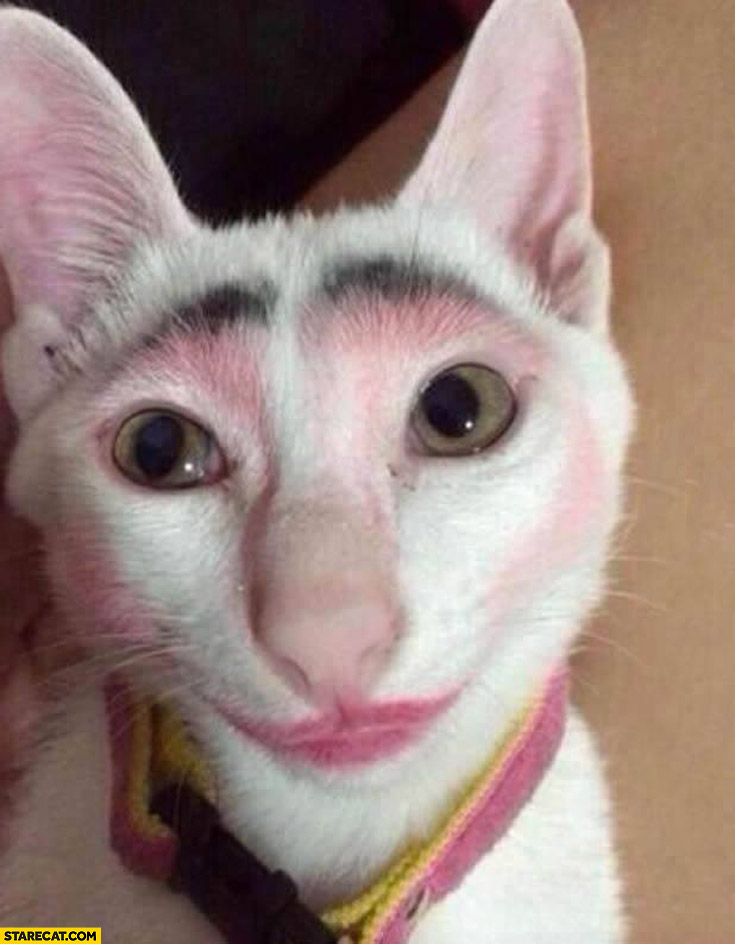 Cat makeup never leave your cat alone with children