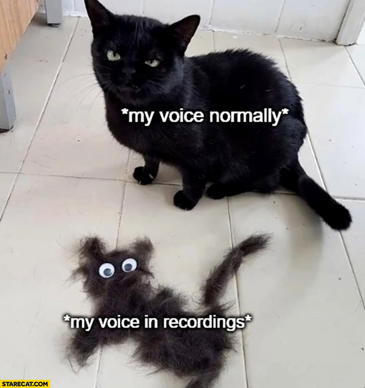 Cat my voice normally vs my voice in recordings fur