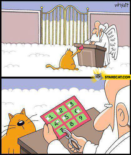 Cat nine lives heaven gates