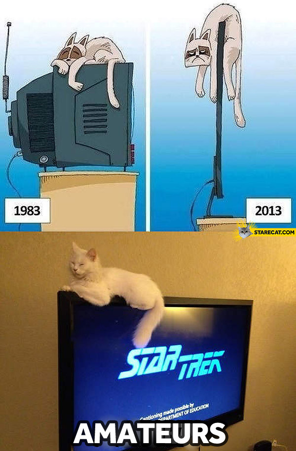 Cat on TV set now then