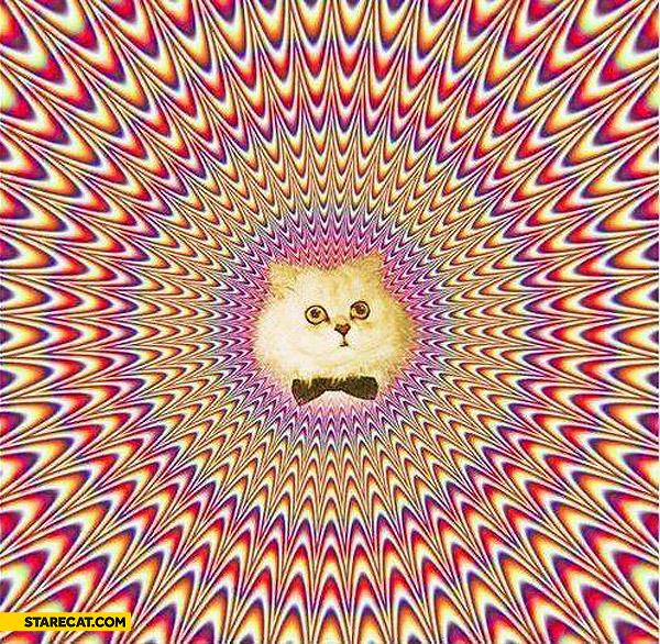 Cat optical illusion
