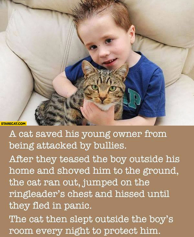 Cat saved kid boy from being attacked by bullies story
