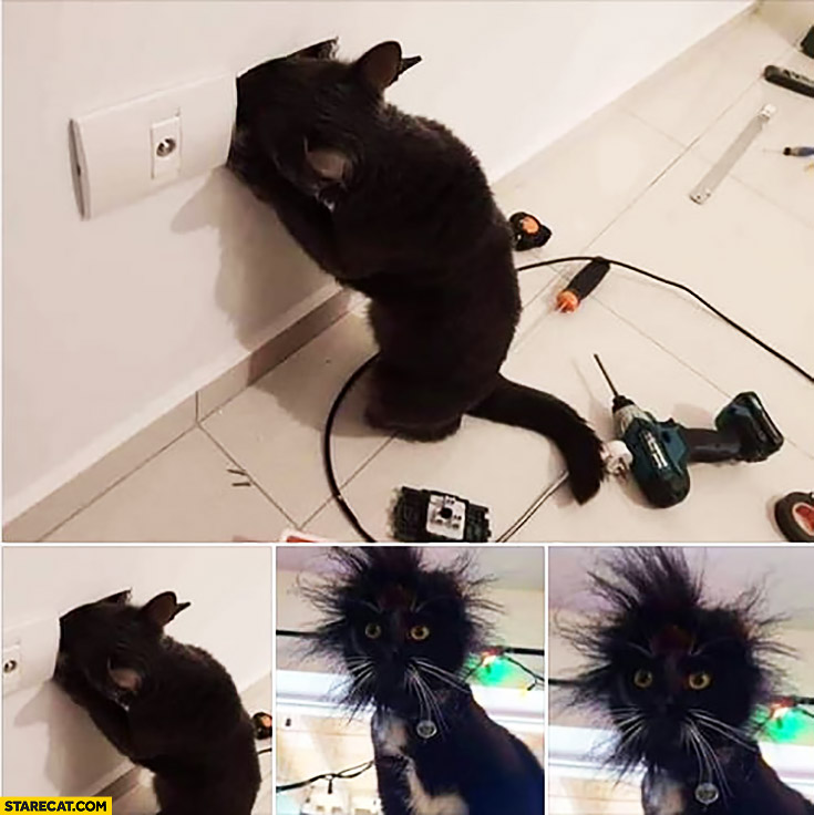Cat shocked by electicity looking funny messed hair
