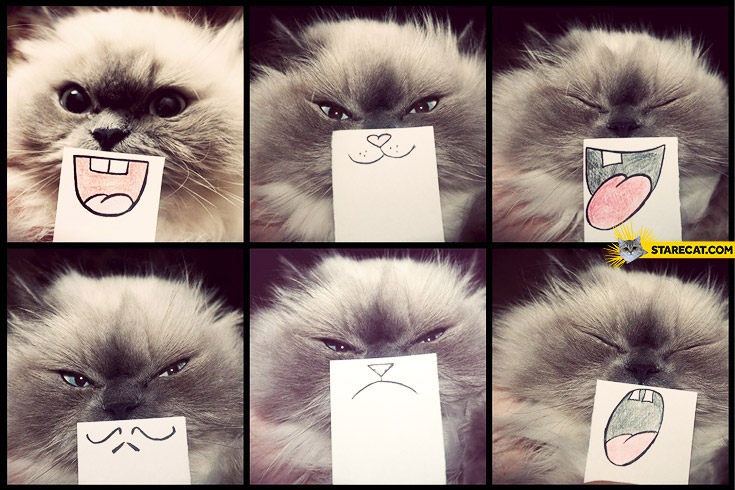 Cat silly faces on paper