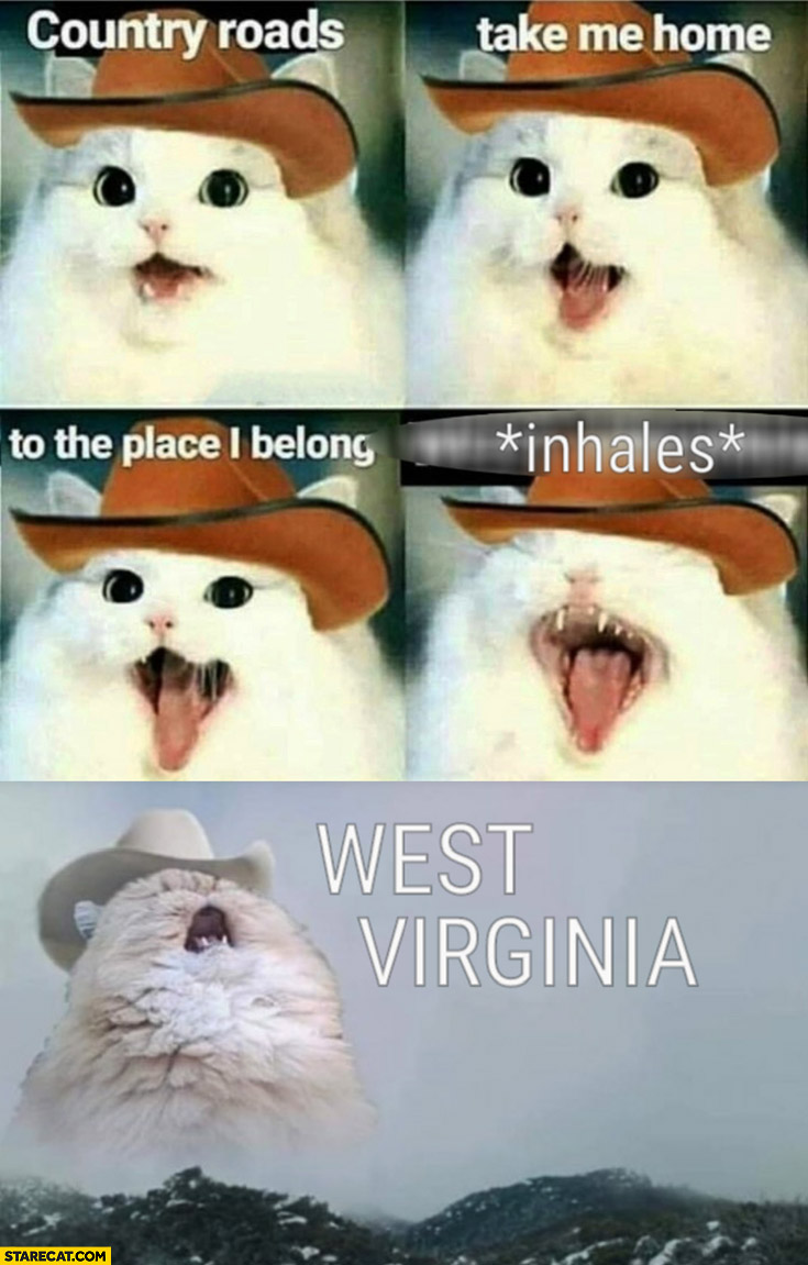 Cat singing country roads take me home to the place I belong *inhales* West Virginia