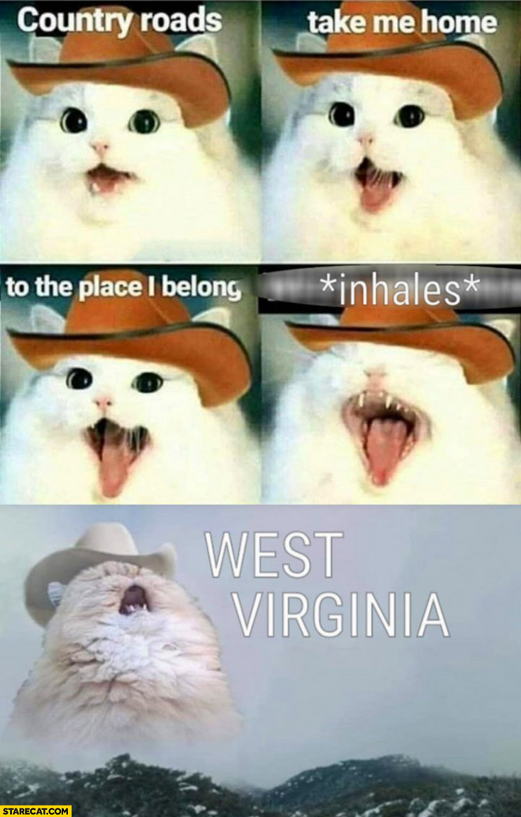 Cat singing country roads take me home to the place I belong West Virginia