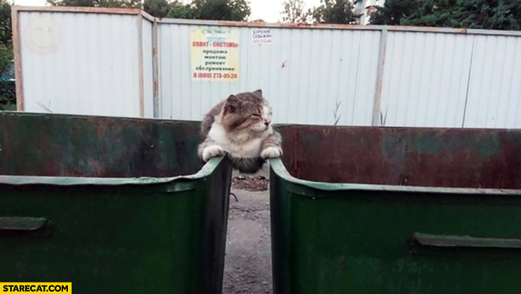 Cat sitting chilling between two trash boxes