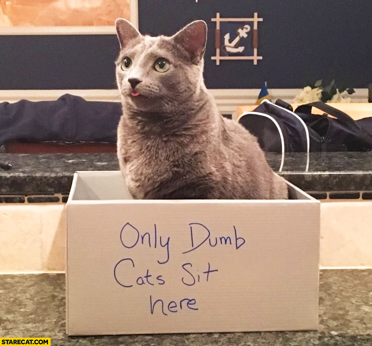 "Cat sitting in a box labeled ""only dumb cats sit here"""