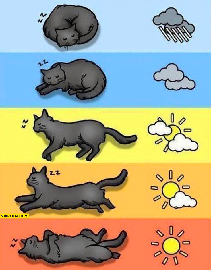 Cat sleeping positions depending on weather temperature