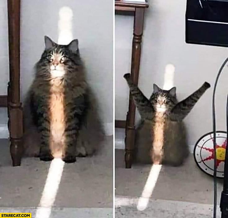 Cat sun praises it