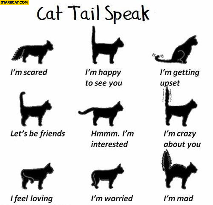 Cat tail speak explained what it means infographic