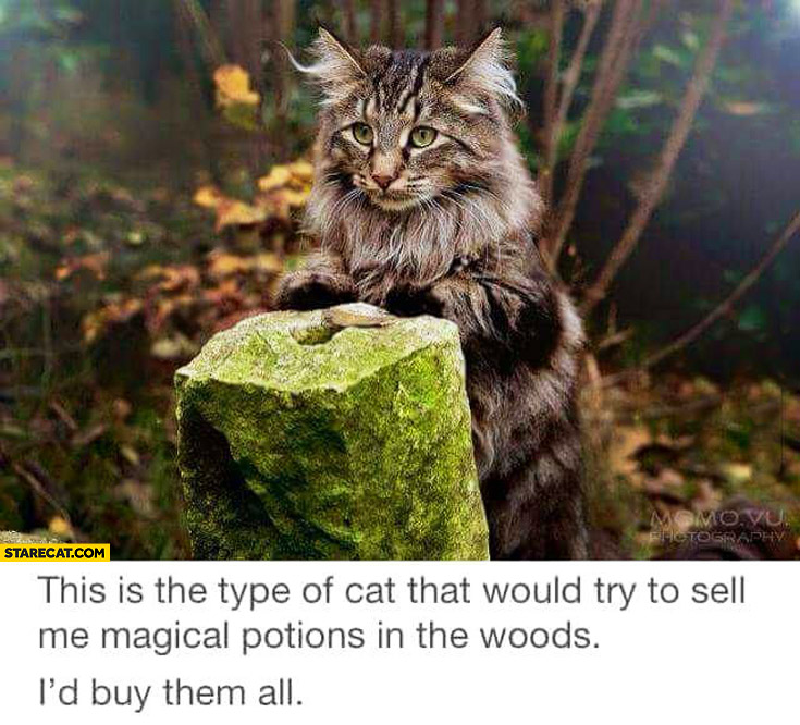 Cat that would try to sell me magical potions in the woods I'd buy them all