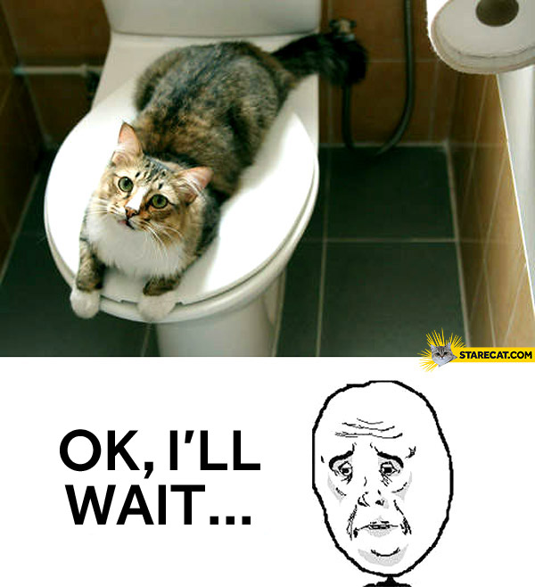 Cat toilet alright I'll wait