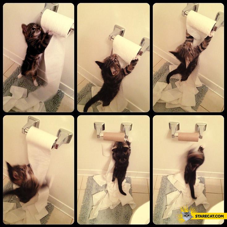 Cat toilet paper roll fail