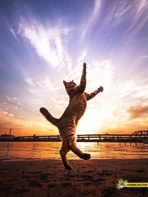 Cat touching the sky