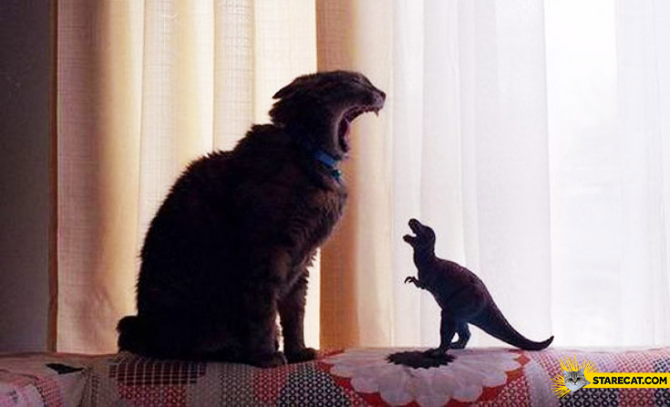 Cat vs dinosaur