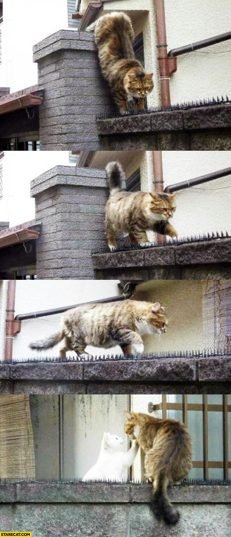 Cat walking on armed fence true love