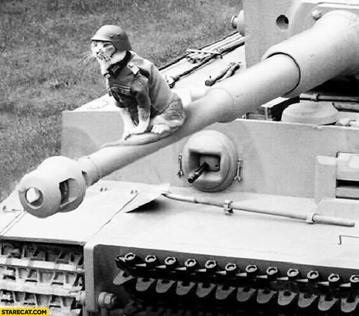Cat wearing helmet sitting on a tank's barrel
