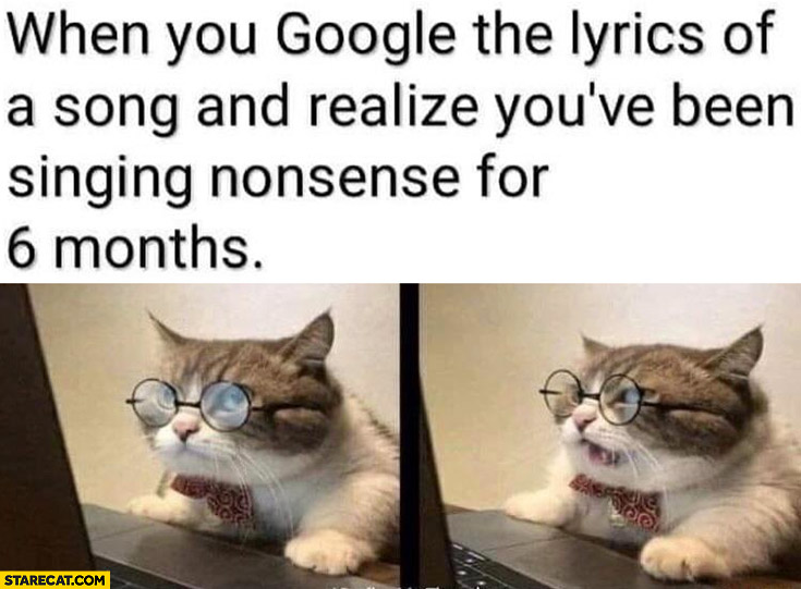 Cat when you google lyrics of a song and realize you've been singing nonsense for 6 months