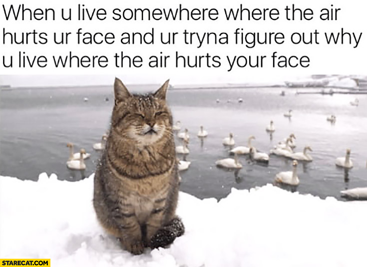 Cat when you live somewhere where the air hurts your face and your trying to figure out why do you live where the air hurts your face