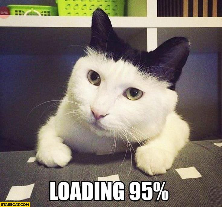 Cat white black loading 95% percent
