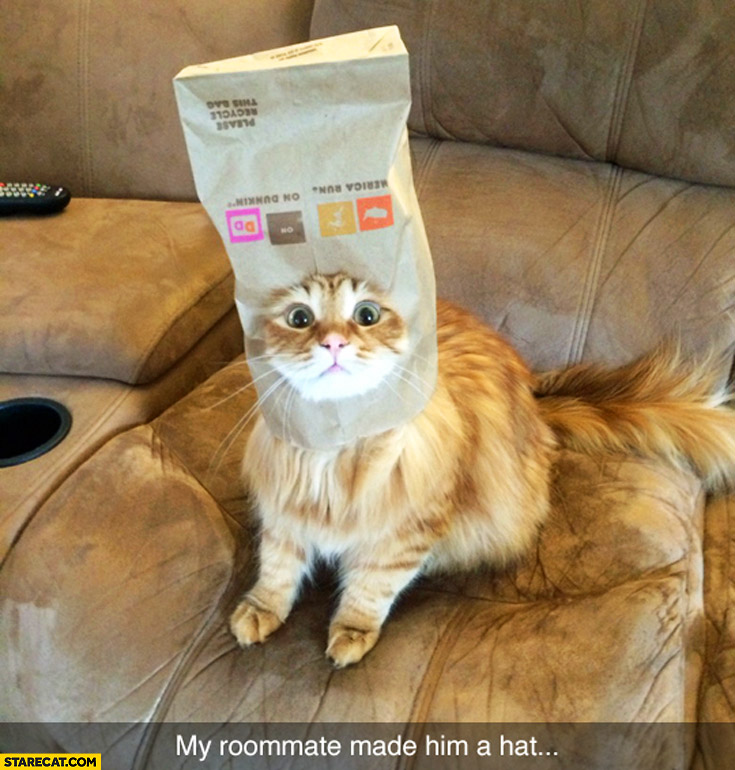 Cat with a paper bag on his head my roommate made him a hat