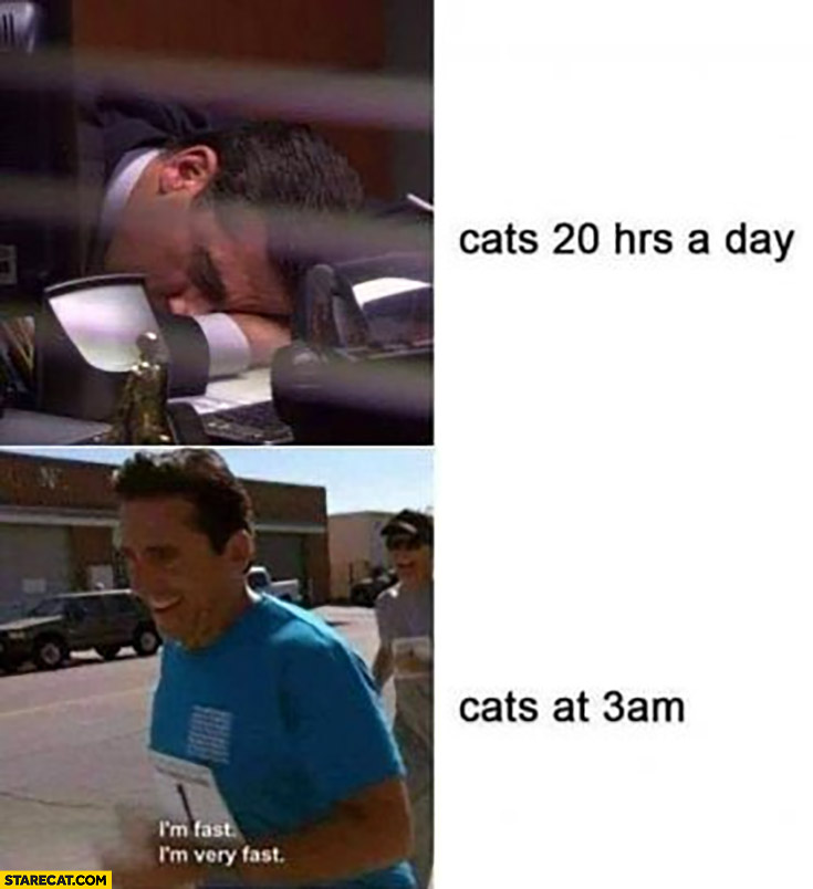 Cats 20 hours a day sleeping vs cats at 3 am running the office